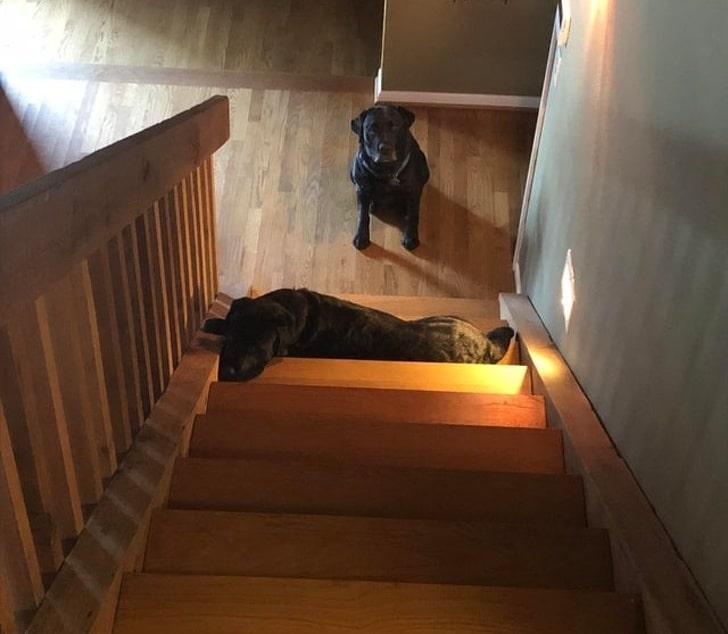 16 kutya, aki megpróbált jó kutyus lenni