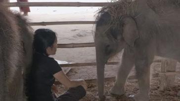 Az árva elefántok alig tudnak elaludni