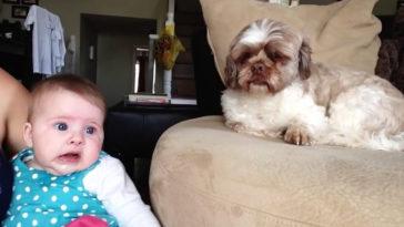 """A baba """"megbeszéli"""" dolgait a kutyával"""