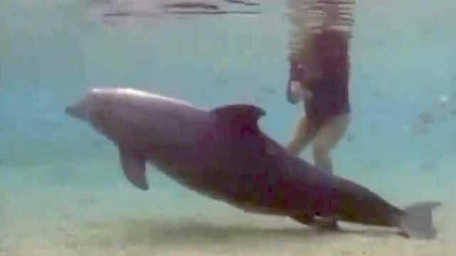A delfin furcsán viselkedik és leúszik a mélybe