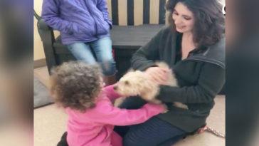 A félős kutya eltűnt és 2 év után nem ismeri fel családját