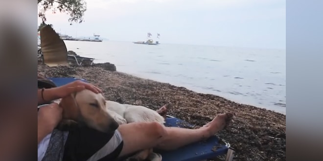 A férfi nyaralni megy és találkozik egy kóbor kutyával