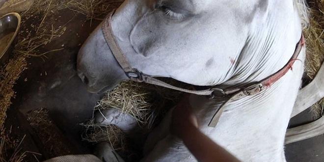 A gazda könyörög a lovának