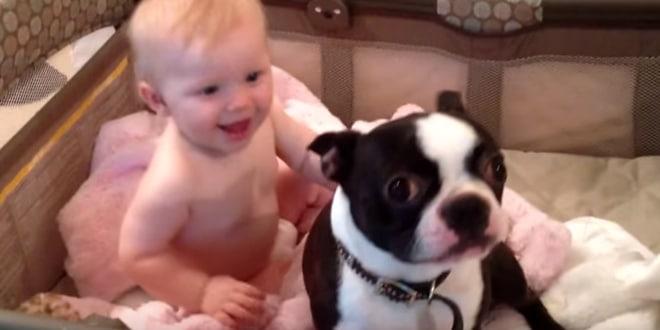 A gazdi arra kéri kutyáját, hogy szálljon ki a kiságyból
