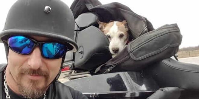 A gazdi kidobta kutyáját az utcára