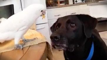 A gazdi nem tudta mitől hízik kutyája