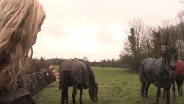 A három lovat elszakították egymástól