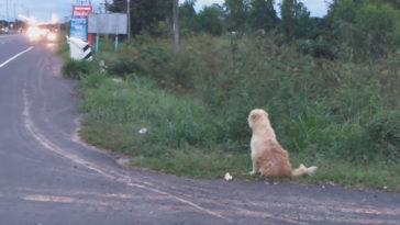 A hűséges kutya 4 év után is az út szélén várja gazdiját