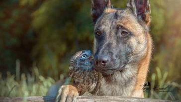 A kedves kutya magához fogadta a megmentett baglyot