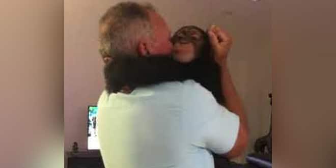 A kis csimpánz ismét együtt van a régi gondozóival