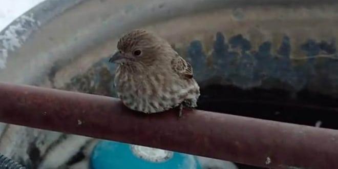 A kis madár odafagyott a vasrúdhoz