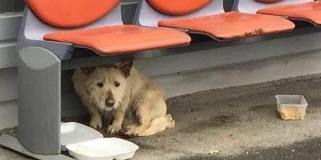A kutyát sokan megverték, de egy nap teljesen megváltozott az élete