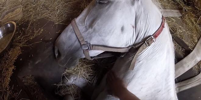A ló fülébe suttogta, hogy nem fog meghalni