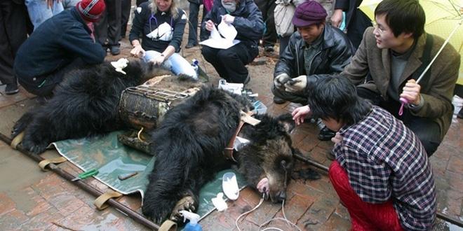 A medvét 9 év után szabadították ki