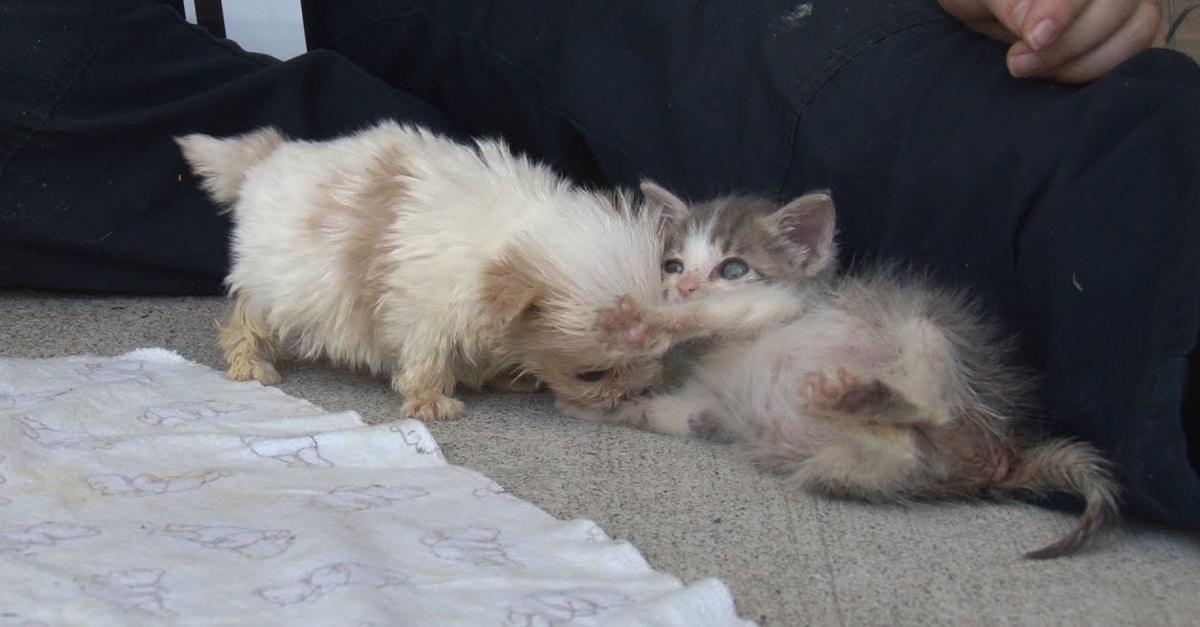 A megmentett kiskutya nagyon rémült volt