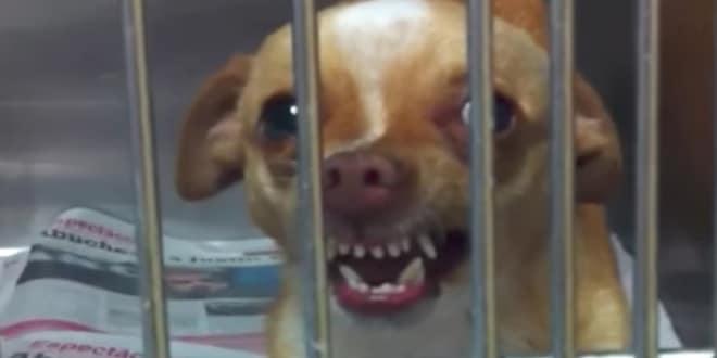 A menhelyi kutya rámorog a nőre