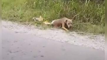 A nő közelebb megy a kóbor kutyához