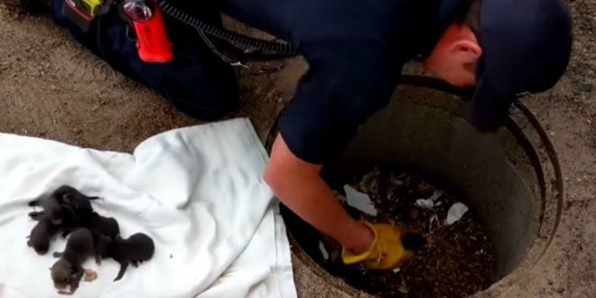 A tűzoltó 8 apró kis állatot ment ki a kútból