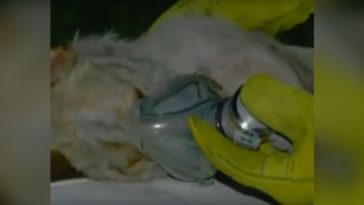 A tűzoltók kimentik a kutyát a tűzből