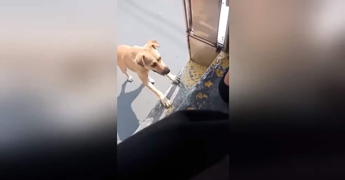 Addig üldözte a buszt egy kóbor kutya