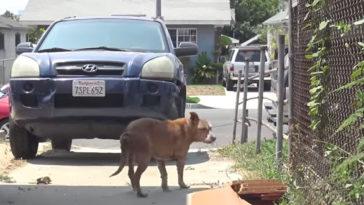 Az idős kutyát magára hagyta a régi családja
