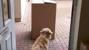 Csomagot talál a kutya a ház előtt