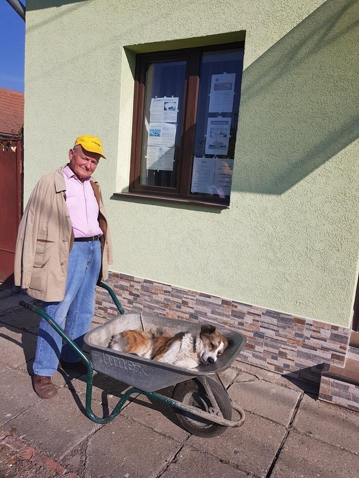 Ez a 84 éves bácsi 8 km-en át vitte kutyáját egy talicskában1