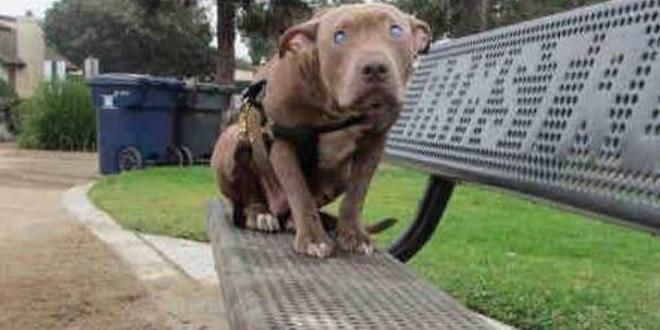Ezt a vak kutyát magára hagyták a parkban