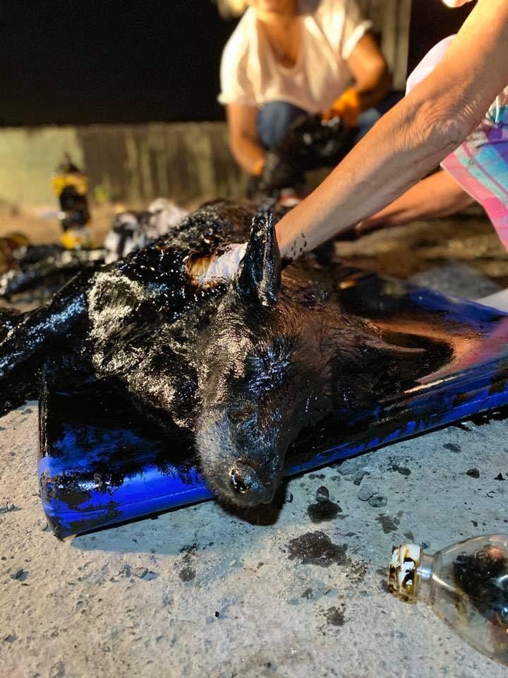 Gyerekek találtak rá erre a kutyának látszó fekete valamire