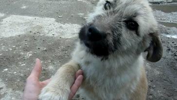 Kezet rázott megmentőjével a kutya