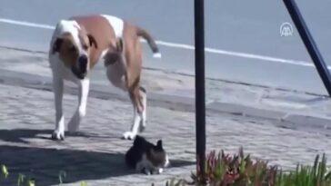 Kutya meglát egy sebesült macskát az út szélén