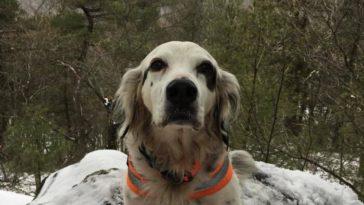Meghalt a kutya, aki medvetámadástól mentette meg gazdáját