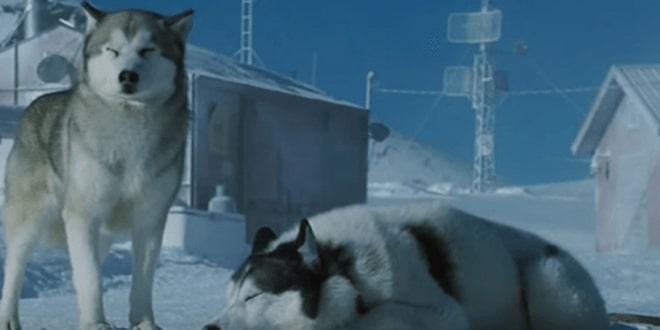 Megható kisfilm mutatja be a kutyák közti barátságot