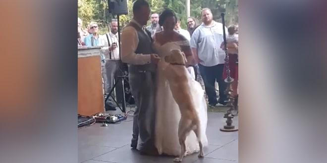 Megható pillanat az esküvőn
