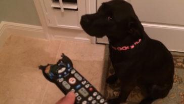 Pofátlan módon letagadja bűnösségét a kutya