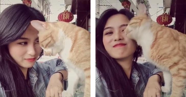 a macskák a szüleiknek tekintenek minket