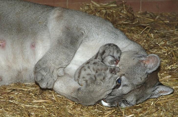 az állatok is képesek szeretni