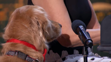 kutya énekel a tehetségkutatóban