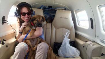 Így mentik meg az önkéntes pilóták az elaltatásra váró kutyákat