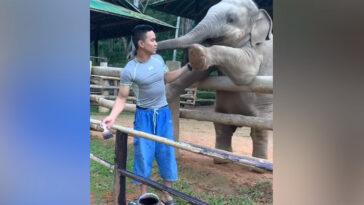 A kis elefánt játszani szeretne a gondozójával
