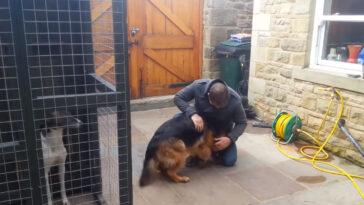 A kutya hónapokon keresztül nem látta gazdáját