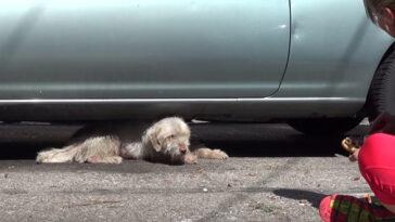 A kutya már hosszú hónapok óta egy parkolóban élt