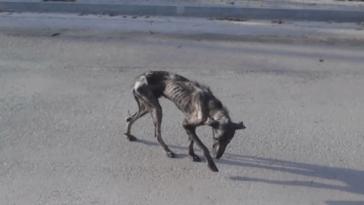 A nő hazavitte a súlyosan beteg kutyát