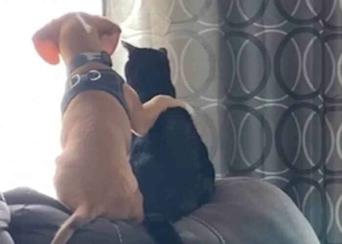 Egy kutya és macska ölelkezve bámult ki az ablakon