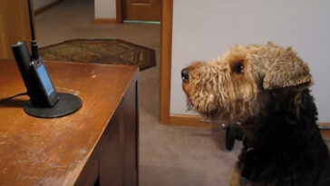 Ez a kutyus hiányolja gazdiját