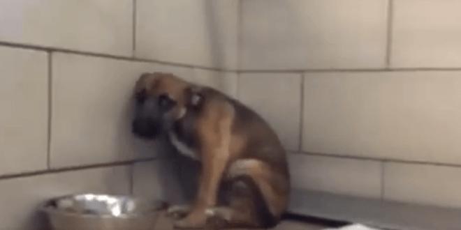 Megpróbálja megsimogatni a menhelyre bevitt kutyát