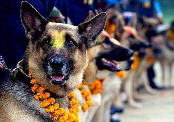 Nepálban van egy ünnepnap, amelyen megköszönjük kutyáinknak, hogy a barátaink