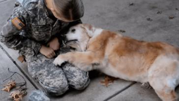 Szívmelengető módon fogadta gazdáját a 13 éves beteg kutyus