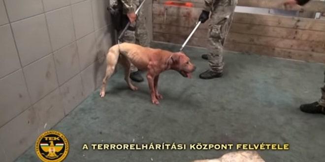 Tiltott kutyaviadalt tartottak egy mohácsi vágóhídon