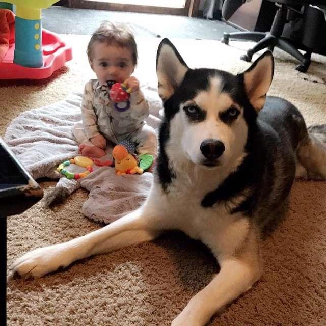 a 2 éves kisfiú a család kutyájával beszélget